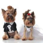 your dog at your wedding